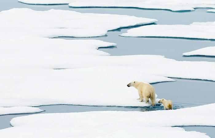 graphics-PolarDisc2-cl_20070804_arcticocean_polarbear_013_352083.jpg