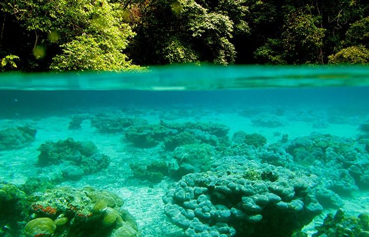 coral-reef-en_350_368614.jpg