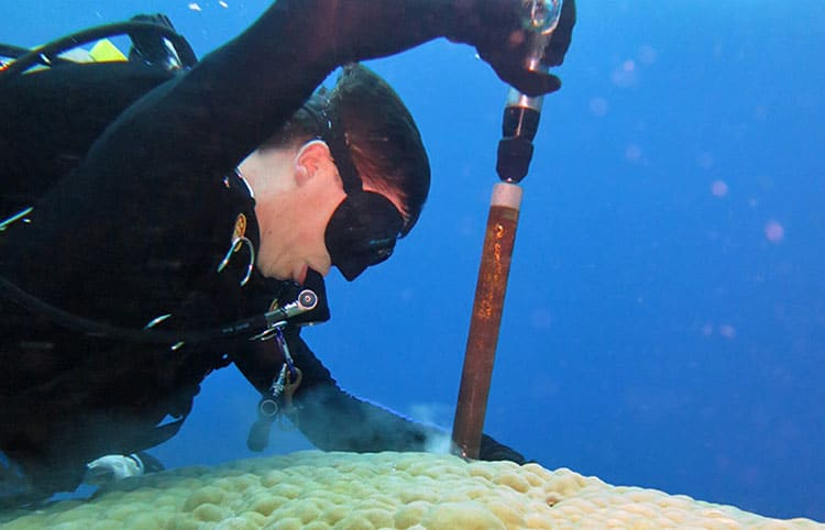 tom_drilling_coral_750_368573.jpg