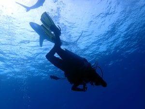 Sharing the Ocean