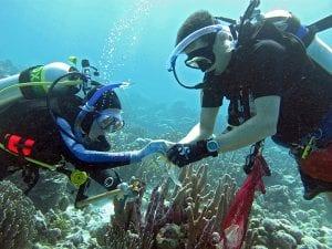 Coral Collectors