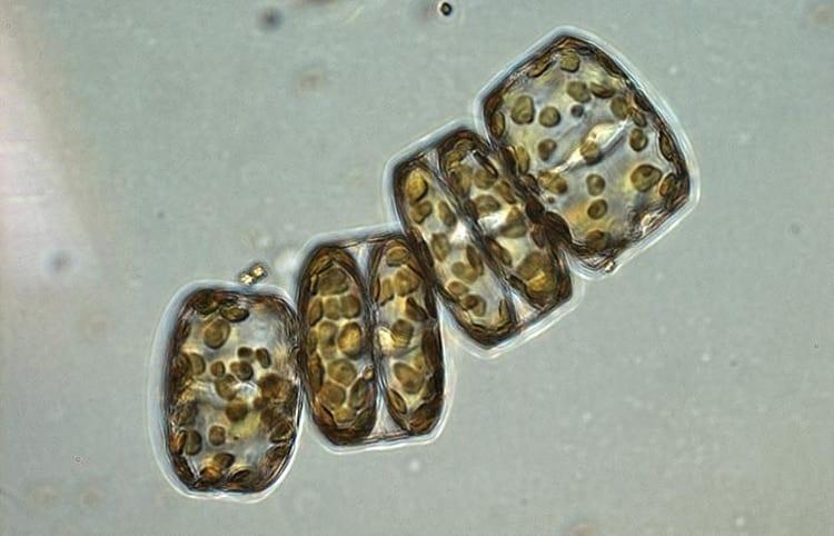 diatom_350_382156.jpg