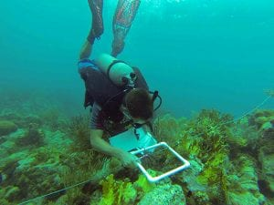 Eavesdropping on the Reefs