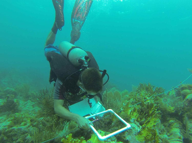 Reef-measurements_350_394913.jpg