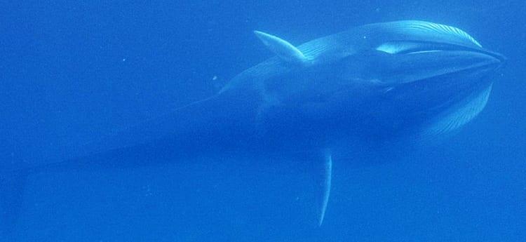whale350_404415.jpg
