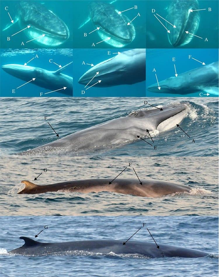 whale_350_404634.jpg
