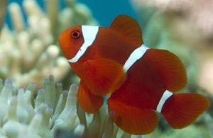 Fertile Reef