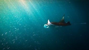 Epiphany Among the Manta Rays