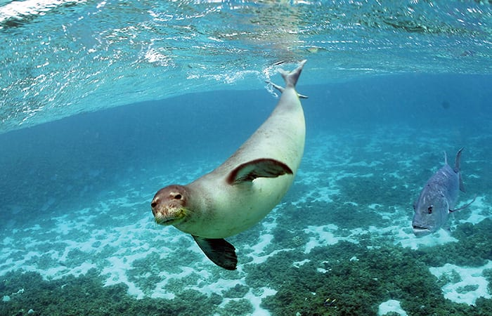 Seal Whiskers Inspire Marine Technology
