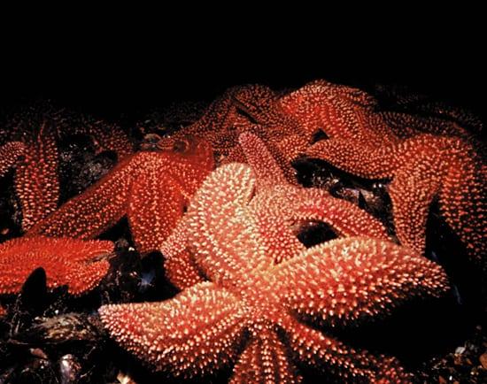 rioux_starfish_117333_154834.jpg
