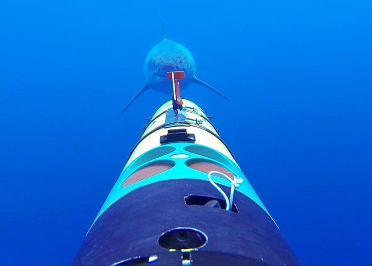 shark_center_350_413093.jpg