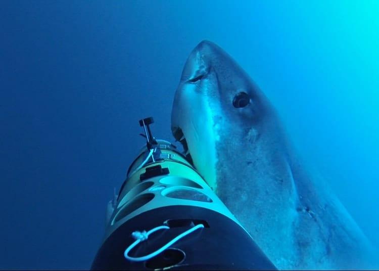 shark_right_350_413053.jpg