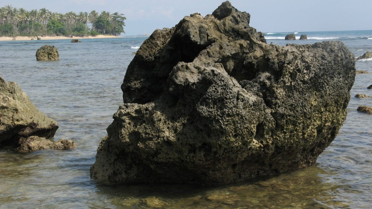 Fossil Porites coral (above) from the southern Mentawai Islands (Indonesia) in the eastern Indian Ocean were used to reconstruct Indian Ocean Dipole variability over previous centuries.