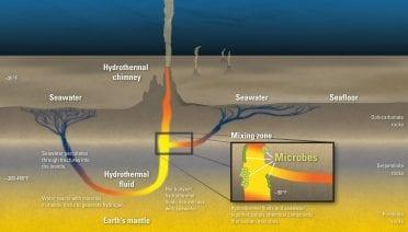 Mummified Microbes