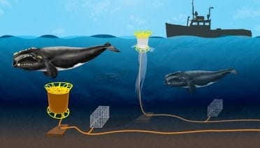 Whale-safe Fishing Gear