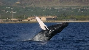 WHOI Study Sheds Light on Previously Overlooked Aspect of Whale Songs
