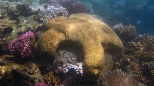 Corals Reveal Past Climate