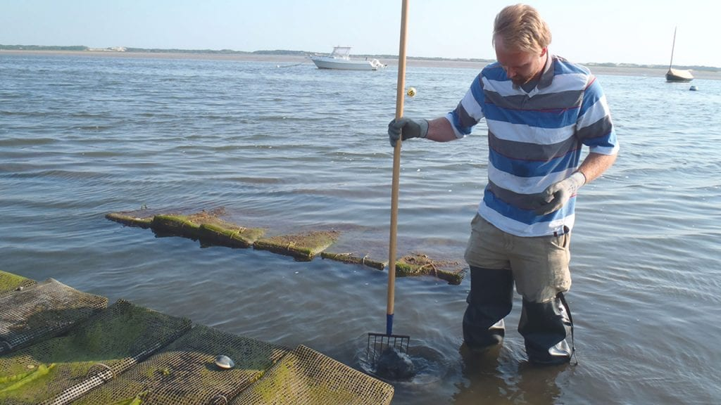 Study Provides Measurement of Nitrogen Removal by Local Shellfish