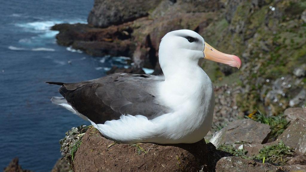 albatross-1280_462353.jpg