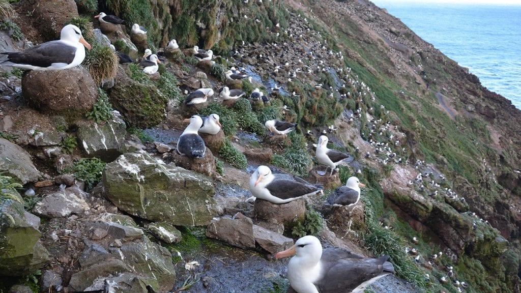 albatross-group-1280_462373.jpg