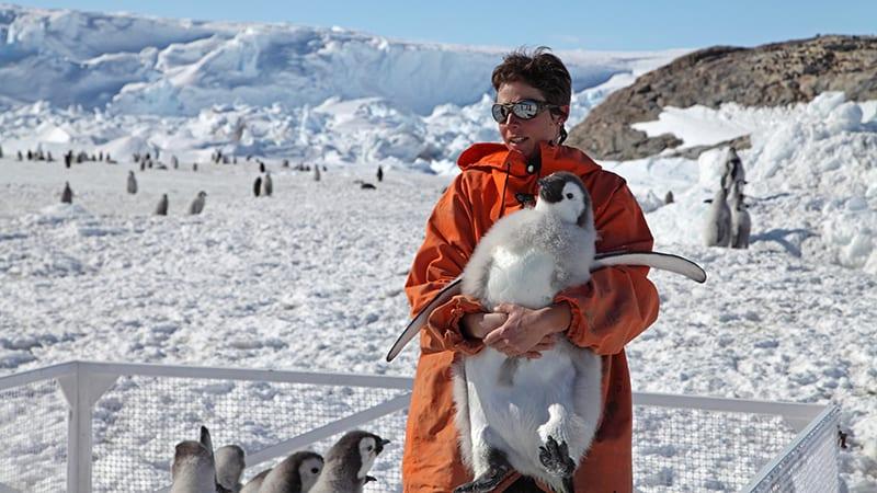 Jenouvrier holding Emperor penguin