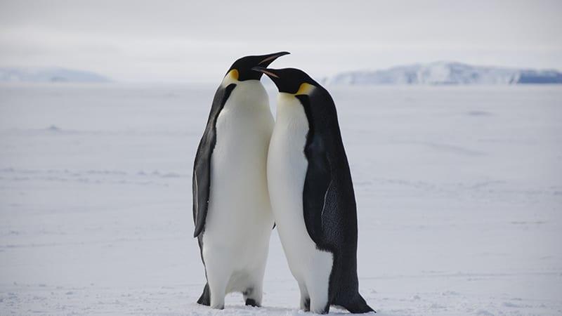 saito_penguin