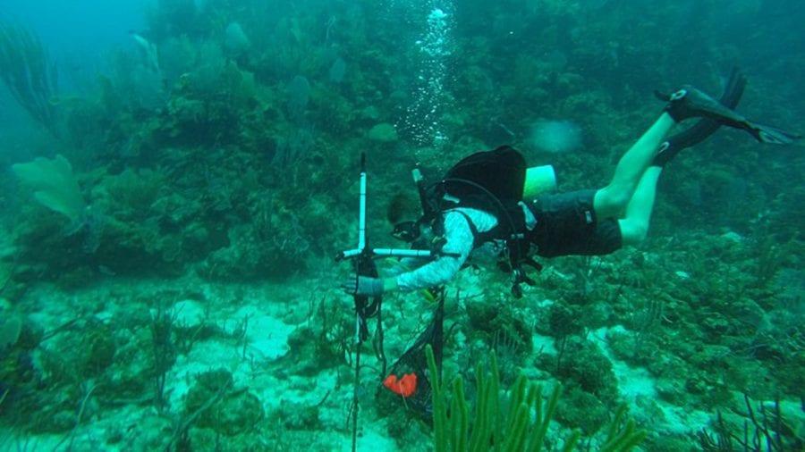 Suca_Diving_470095.jpg