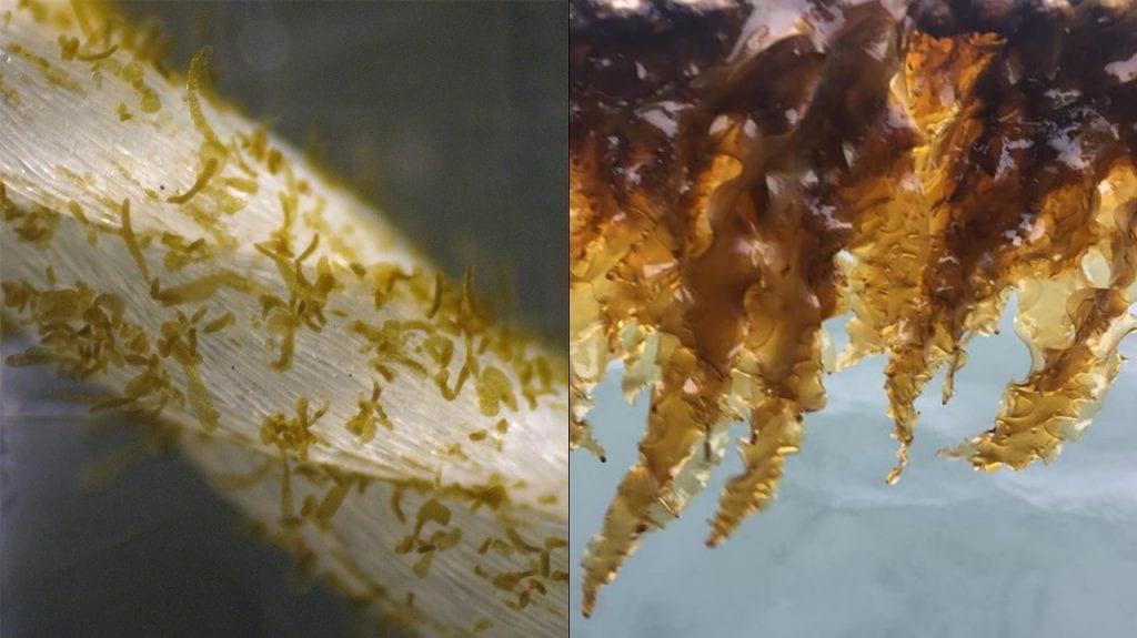 Kelp-1280_473796.jpg