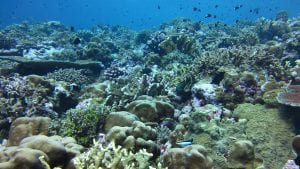 Scientists Pinpoint How Ocean Acidification Weakens Coral Skeletons