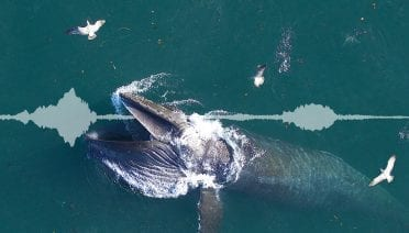 Scientists Reveal Secrets of Whales