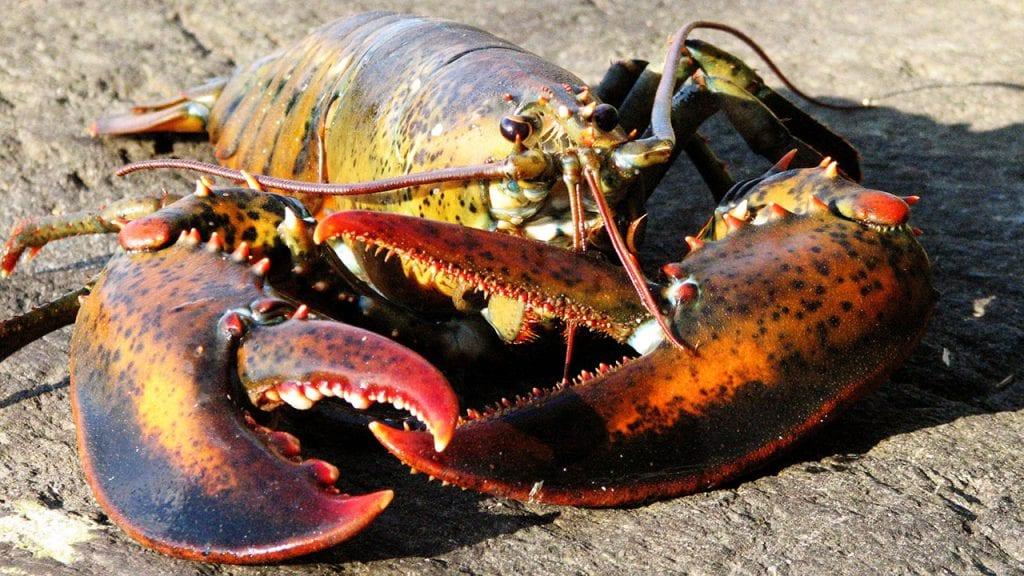 lobster1280_482193.jpg