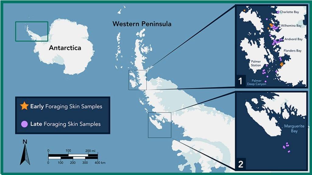 AntarcticWhaleSamplingMap_1280_483973.jpg