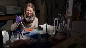 From Whales to Microbes