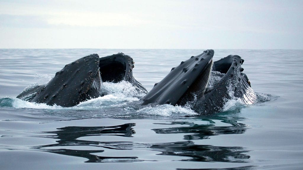 two-whales-1280_483893.jpg