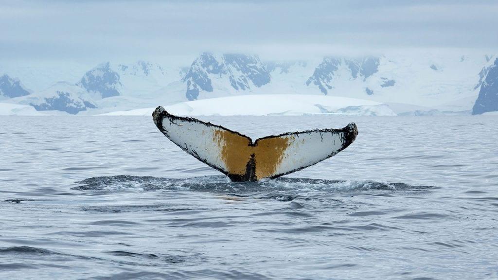 whale-tale-iceberg1280_483875.jpg