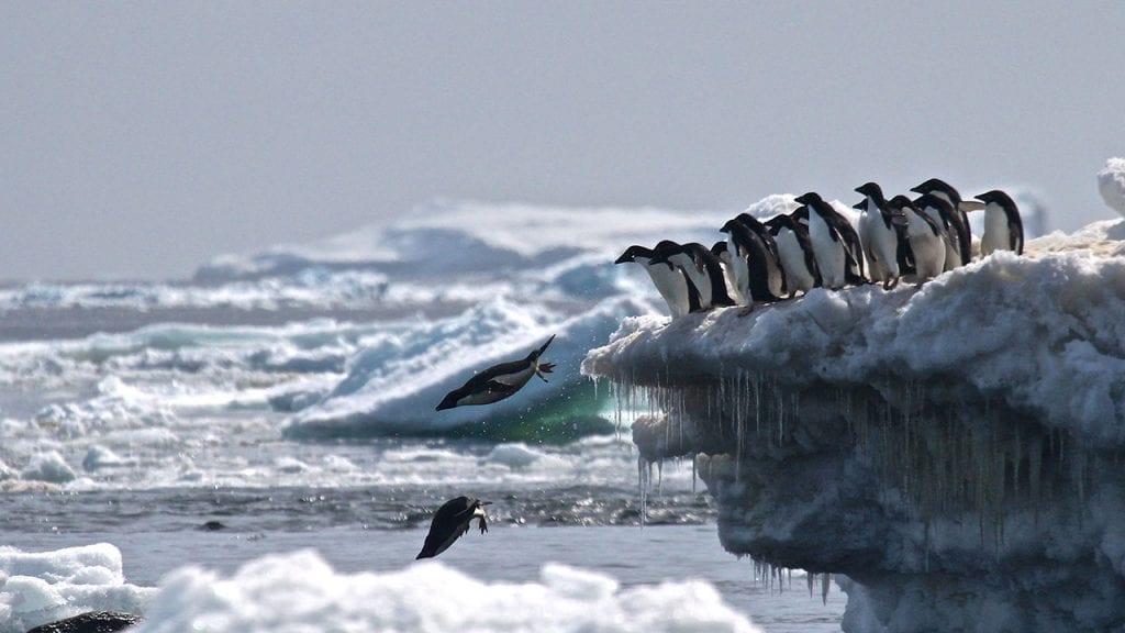 Danger-Islands-penguin-jump1280)_485173.jpg