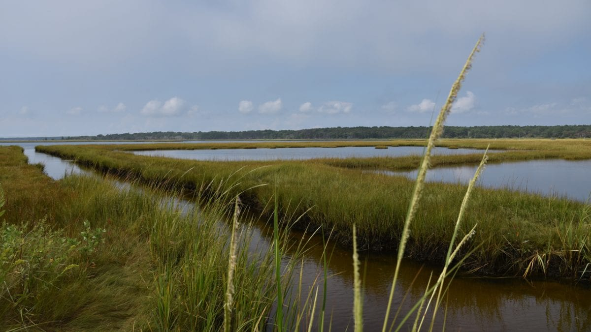 Woods Hole Sea Grant Awards Funds to Six New Coastal Projects