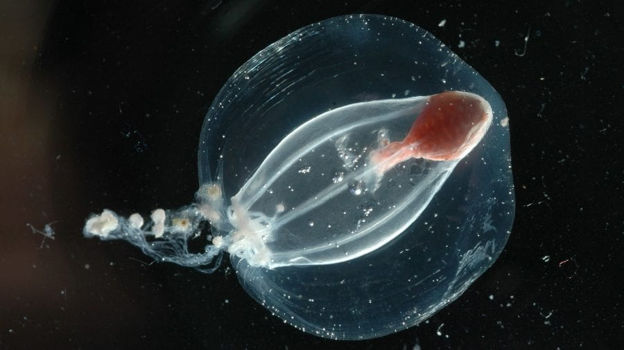 Jellyfish_graphics-dd_Lmadin-animals-DSC_0021_1920x1080.jpg