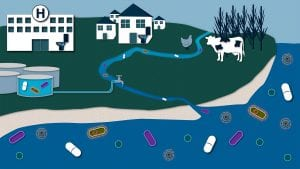 The Bacteria on Your Beaches