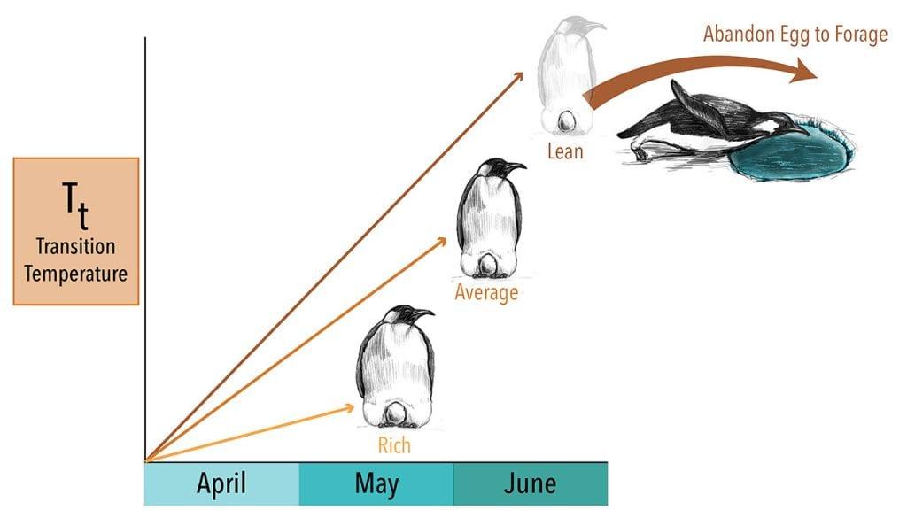 Penguin-Graph(months)_Master-01_490553.jpg