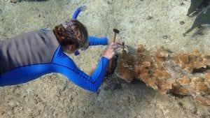 Sampling Coral Health