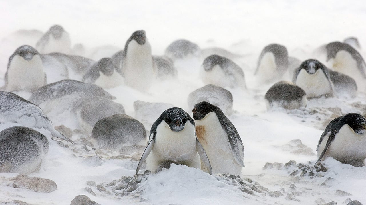 What's New Penguin?
