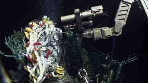Fueling a Deep-Sea Ecosystem
