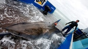 Sharks Take 'Tunnels' into the Depths