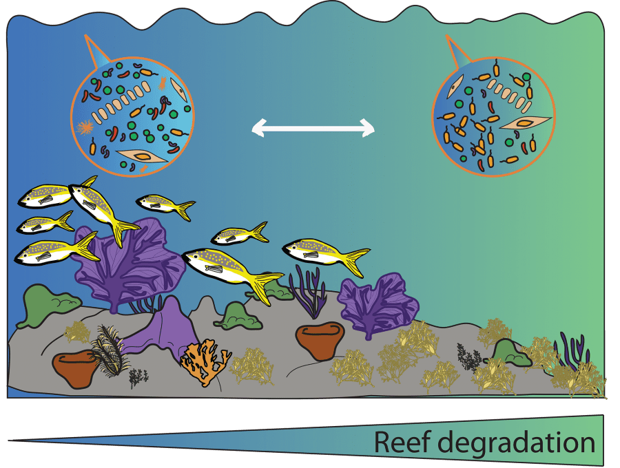 The Coral Reef Microbiome