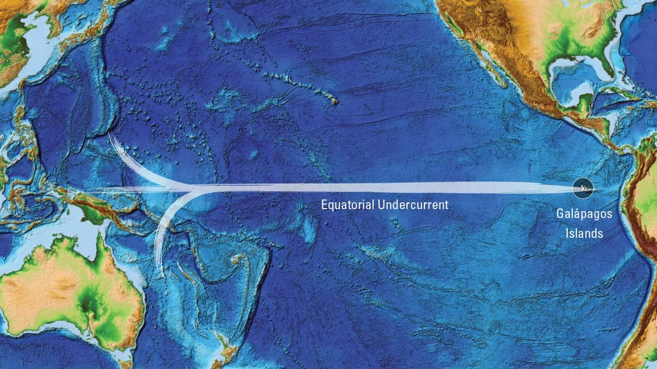 Equatorial_Undercurrent_502777.jpg