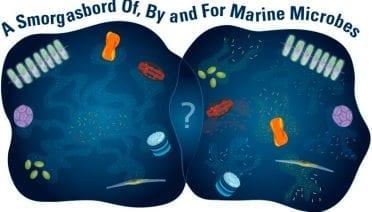 Marine Microbe Relations
