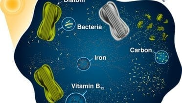 Bacteria and Diatoms