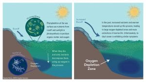Will Oxygen in the Ocean Continue to Decline?