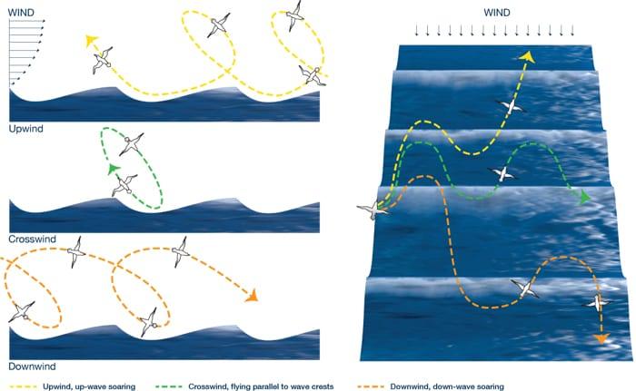 Albatross Flight Dynamics
